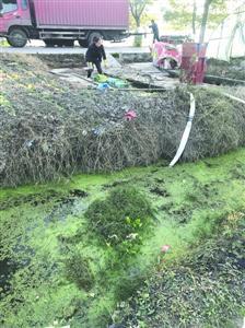 图说:清洗后蔬菜就会被运往市场,而清洗蔬菜的水塘水疑似来自旁边的小沟