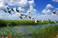 《关于建立以国家公园为主体的自然保护地体系的指导意见》