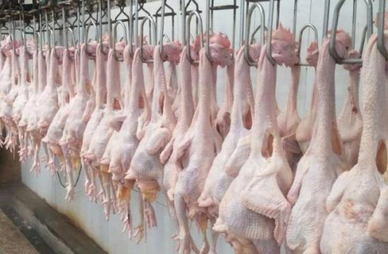 山西稷山县:延展蛋鸡产业链条力促农民增收
