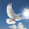 专访:走进周雁翔和他创意策划追求的和平女神梦